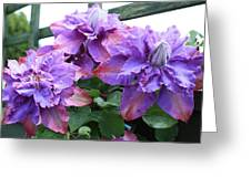Clematis Vyvyan Pennell Greeting Card