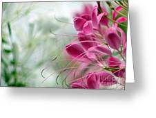 Cleome Meditation Love And Light Greeting Card