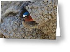 Cliff Dweller Greeting Card