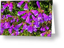 Cliff Penstemon On Watchman Overlook In Crater Lake National Park-oregon Greeting Card