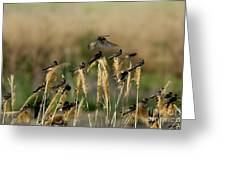 Cliff Swallows Perched On Grasses Greeting Card