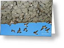 Cliff Swallows Returning To Nests Greeting Card