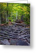 Climbing The Rocks And Roots Of Bald Mountain Greeting Card