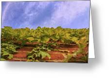 Climbing The Walls - Ivy - Vines - Brick Wall Greeting Card