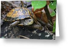Climbing Turtle Greeting Card