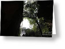 Climbing Up The Tree Greeting Card