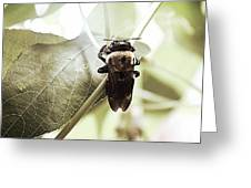 Clinging Bumble Bee Greeting Card