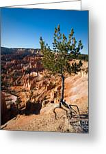 Clinging To The Edge Bryce Canyon Greeting Card