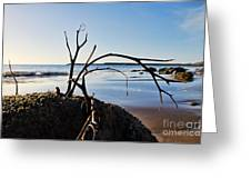 Clinging To The Rocks Greeting Card