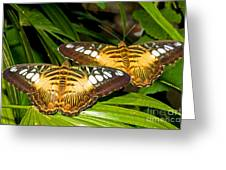 Clipper Butterflies Greeting Card