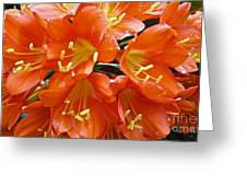 Music Please Clivia Greeting Card