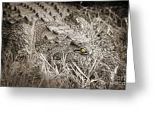 Close Crocodile  Greeting Card