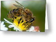 Close Encounter Of The Bee Kind Greeting Card