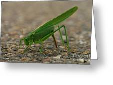Close Encounter Of The Green Kind Greeting Card