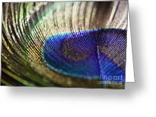 Close Feather Greeting Card