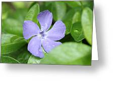 Close Purple Flower Greeting Card