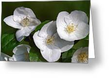 Close Trio Of White Flowers Greeting Card
