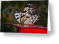 Close Up Greeting Card