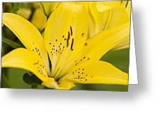 Close Up Beauty Greeting Card