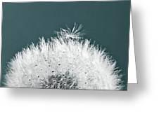 Close-up Dandelion Seeds, Prague, Czech Greeting Card