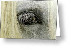 Close-up Details Of Gypsy Vanner Horse Greeting Card