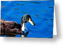 Close Up Duck Greeting Card
