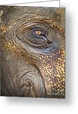 Close-up Elephant Eye Greeting Card
