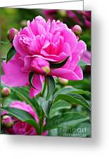 Close Up Flower Blooming Greeting Card