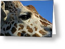 The Giraffe's Eye Greeting Card
