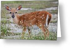 Close Up Key Deer Greeting Card