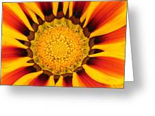 Close Up Marigold Greeting Card