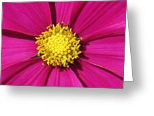 Close Up Of A Cosmos Flower Greeting Card
