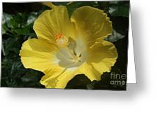 Close Up Of A Hibiscus...   # Greeting Card