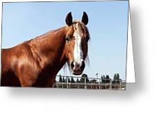 Close Up Of A Horse Greeting Card