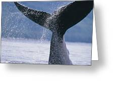 Close Up Of A Humpback Whale Fluke In Greeting Card