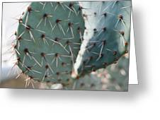 Close-up Of A Prickly Pear Cactus Greeting Card