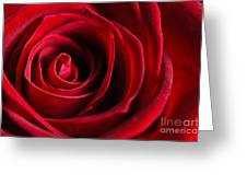 Close Up Of A Red Rose Greeting Card