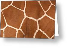 Close-up Of A Reticulated Giraffe Greeting Card