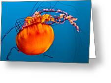 Close Up Of A Sea Nettle Jellyfis Greeting Card