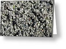Close-up Of Acorn Barnacles Greeting Card