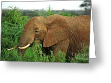 Close Up Of African Elephant Greeting Card