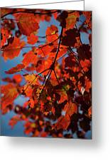 Close Up Of Bright Red Leaves With Blue Greeting Card