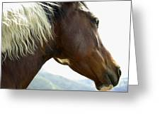 Close-up Of Brown Pinto Pony With White Greeting Card