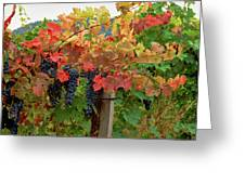 Close-up Of Cabernet Sauvignon Grapes Greeting Card