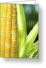 Close-up Of Corn An Ear Of Corn  Greeting Card by Sandra Cunningham