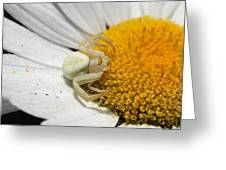 Close-up Of Crab Spider Greeting Card