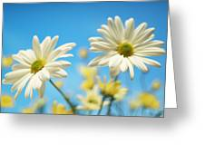 Close-up Of Daisies Against A Blue Greeting Card