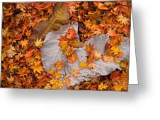 Close-up Of Fallen Maple Leaves Greeting Card