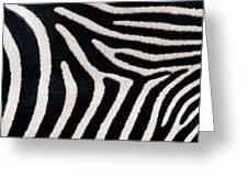 Close-up Of Greveys Zebra Stripes Greeting Card