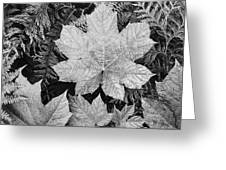 Close Up Of Leaves Greeting Card